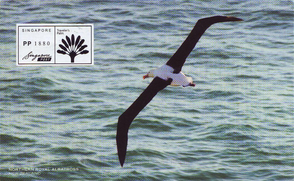 Albatros.jpg